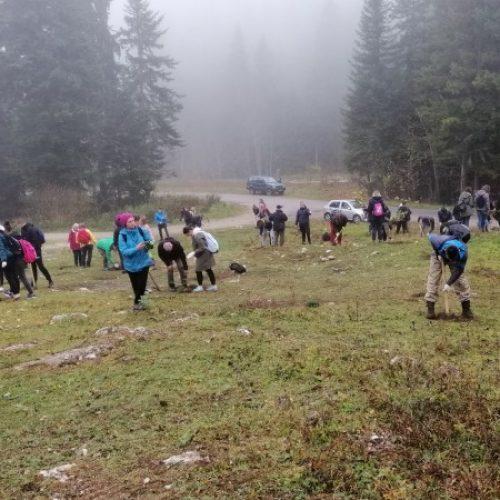 Učenici i studenti u akciji  pošumljavanja na Igmanu