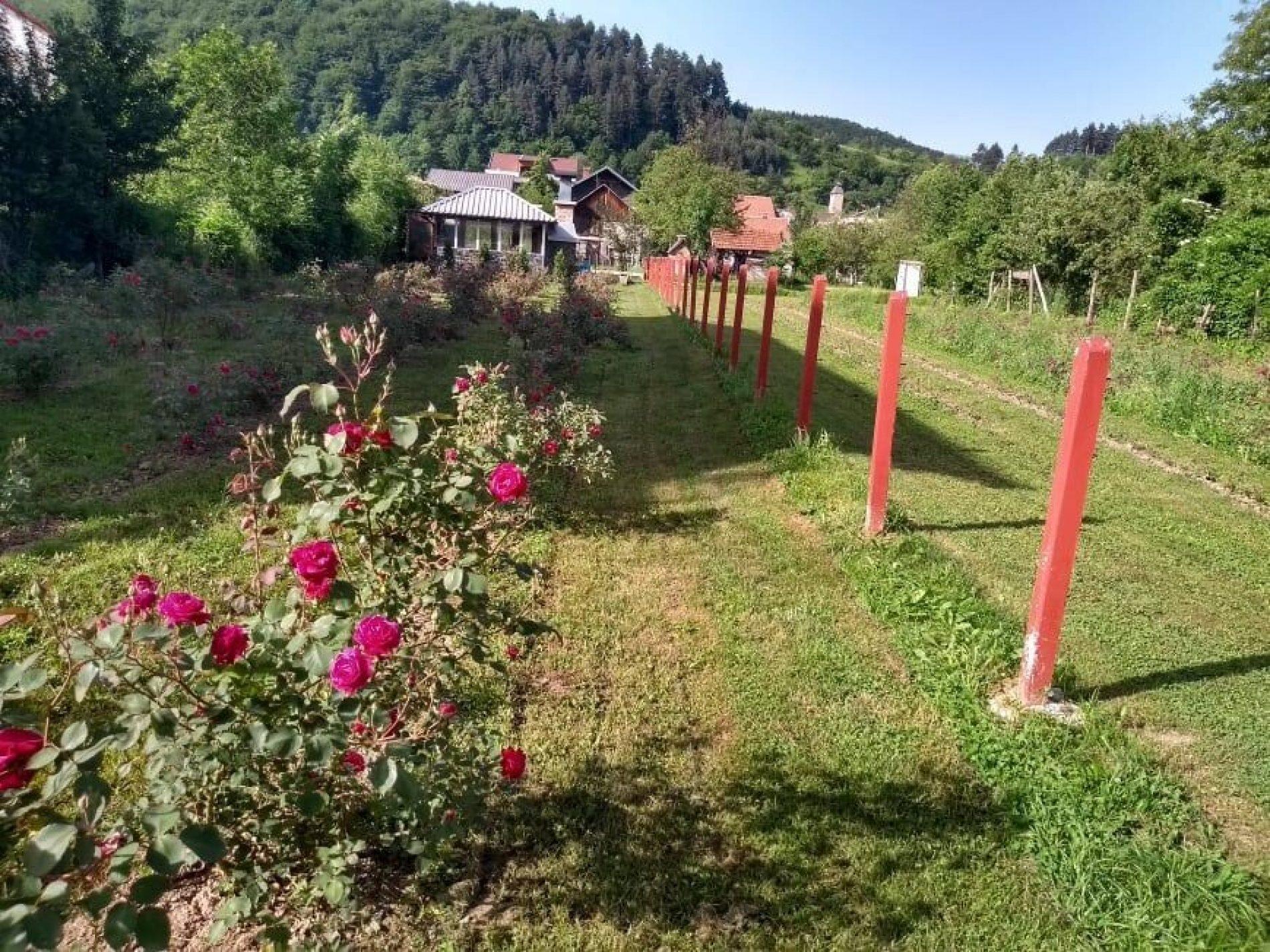 Emir Hadžijusufović brine o hiljadu sadnica ruža – proširio i paletu proizvoda
