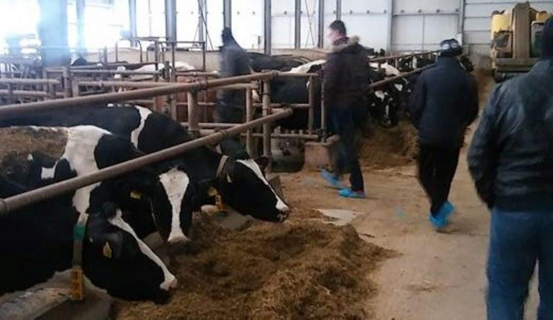 Uspješna poljoprivredna zadruga iz Tuzle: Milk Land obezbjeđuje 955 plata