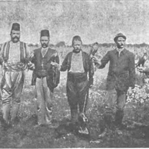 Lov sa sokolovima, zaboravljena tradicija Bosne
