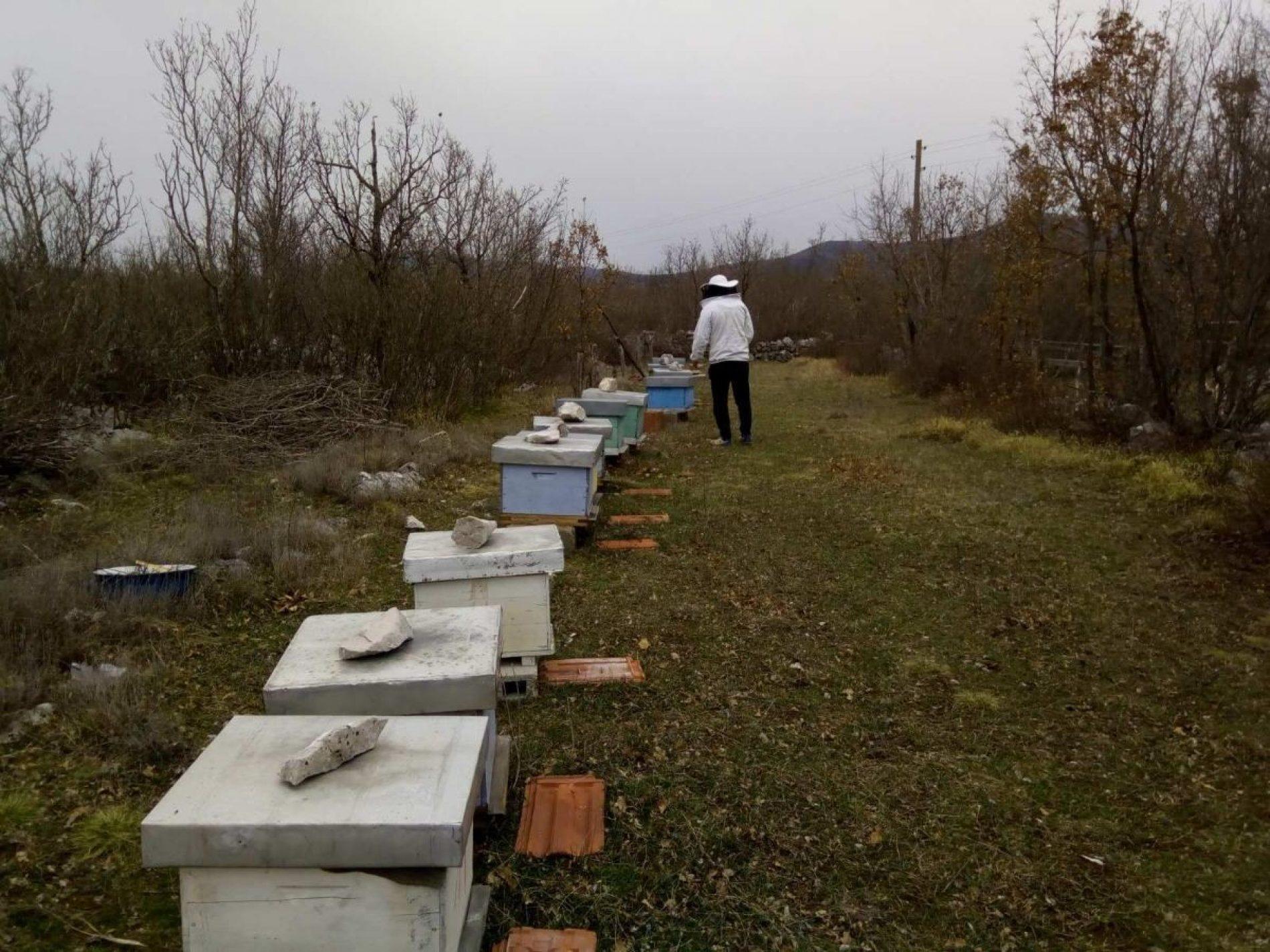 Imaju više košnica nego stanovnika i prave odličan med