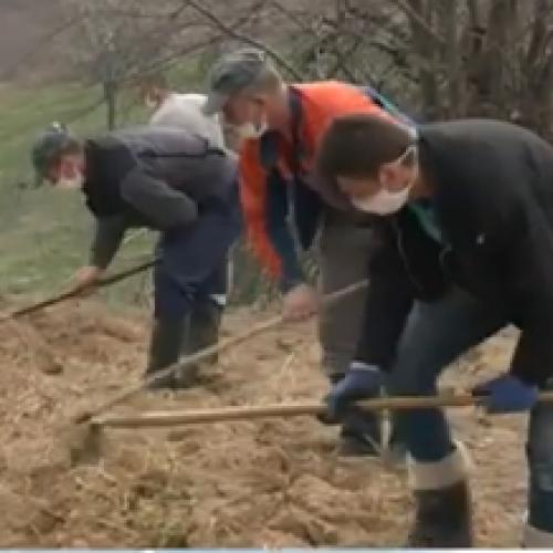 Mještani Željeznog Polja pokrenuli masovnu proljetnu sjetvu (Video)
