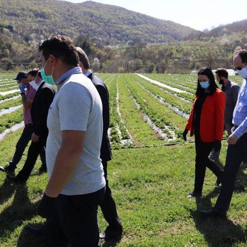 """Kompanija """"Agro ideja"""" iz Sarajeva na području Ustikoline proizvodi voće i povrće"""