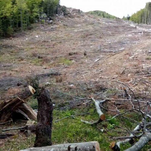 """""""Hrvatske šume"""" sijeku šumu i na teritoriji Bosne i Hercegovine"""