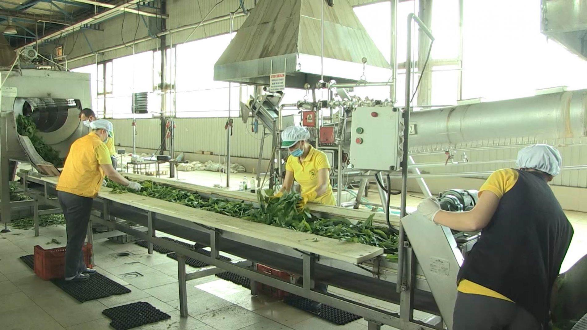 'Semberka' u Janji pokazuje da naša zemlja može proizvoditi hranu za svoje stanovništvo