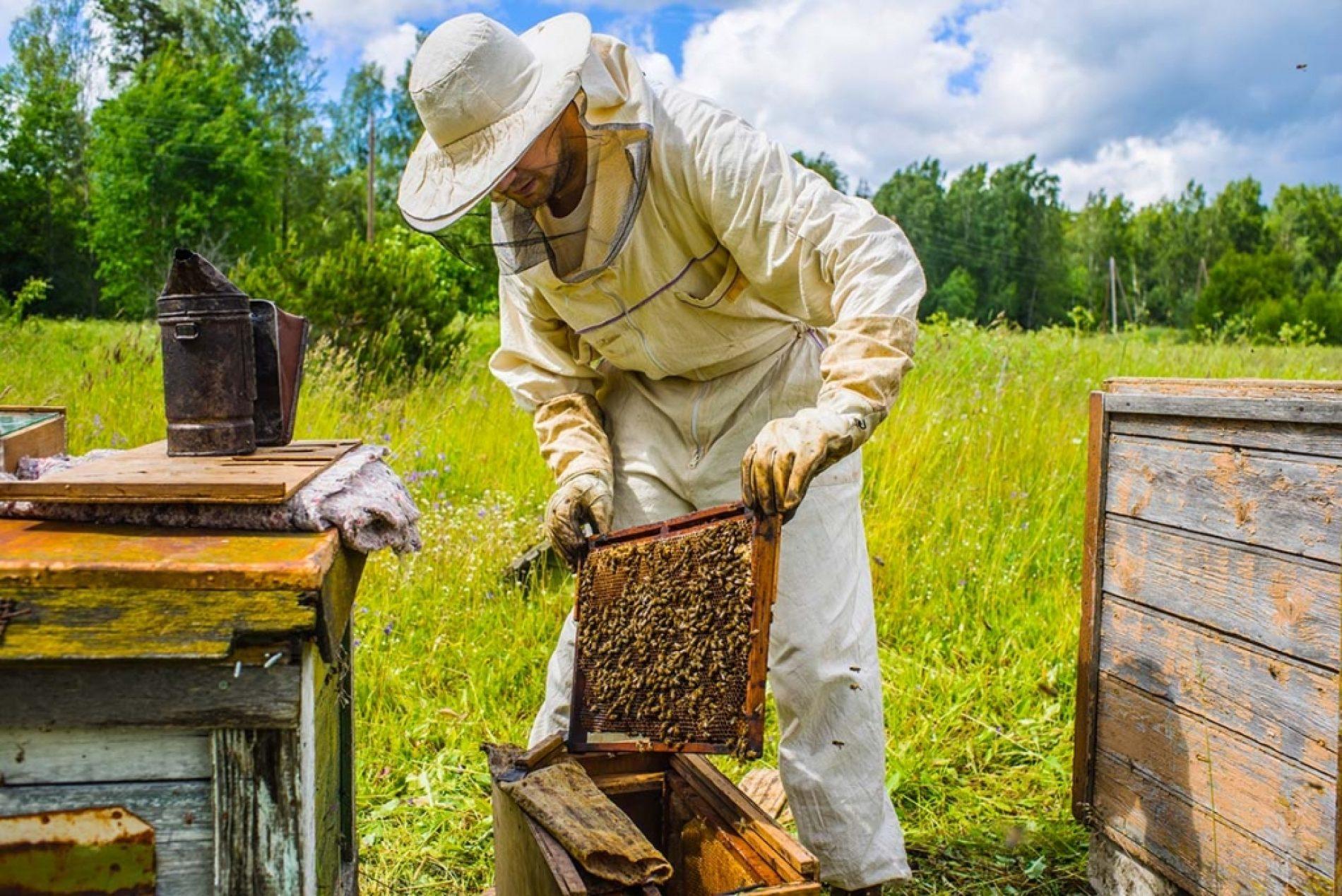 Nijedan pčelar nije zaražen koronavirusom!