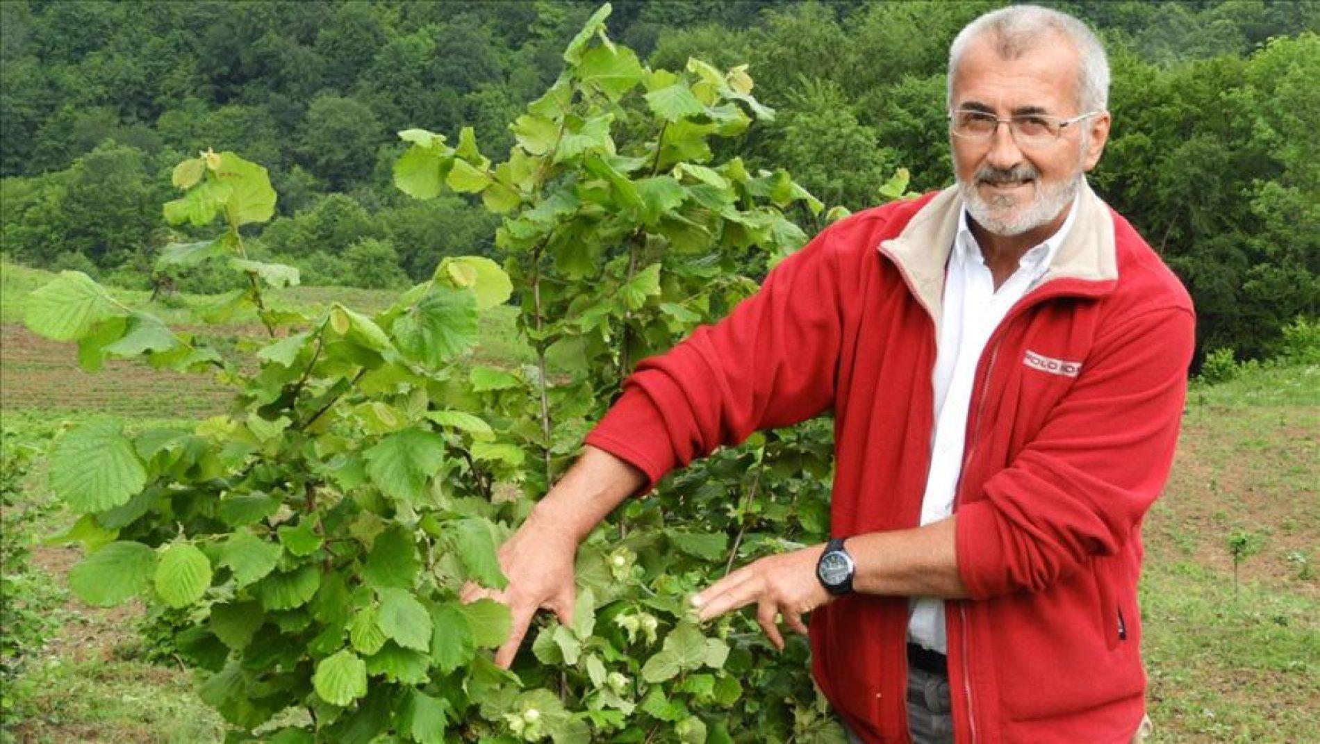 Mujo Begić u rodnim Begićima kod Vlasenice namjerava zasaditi 100 hektara italijanskog lješnjaka