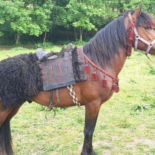 U toku pripreme za osnivanje novih ergela bosanskih brdskih konja