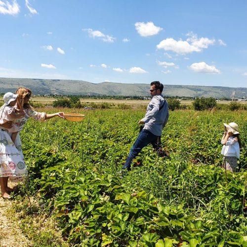 Jaffa Plantaže: Proizvodnja i turizam na 75 hektara