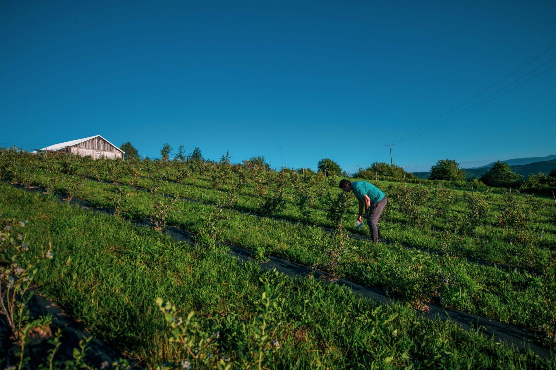 Selo Osmače kod Srebrenice sinonim za uspješan povratak