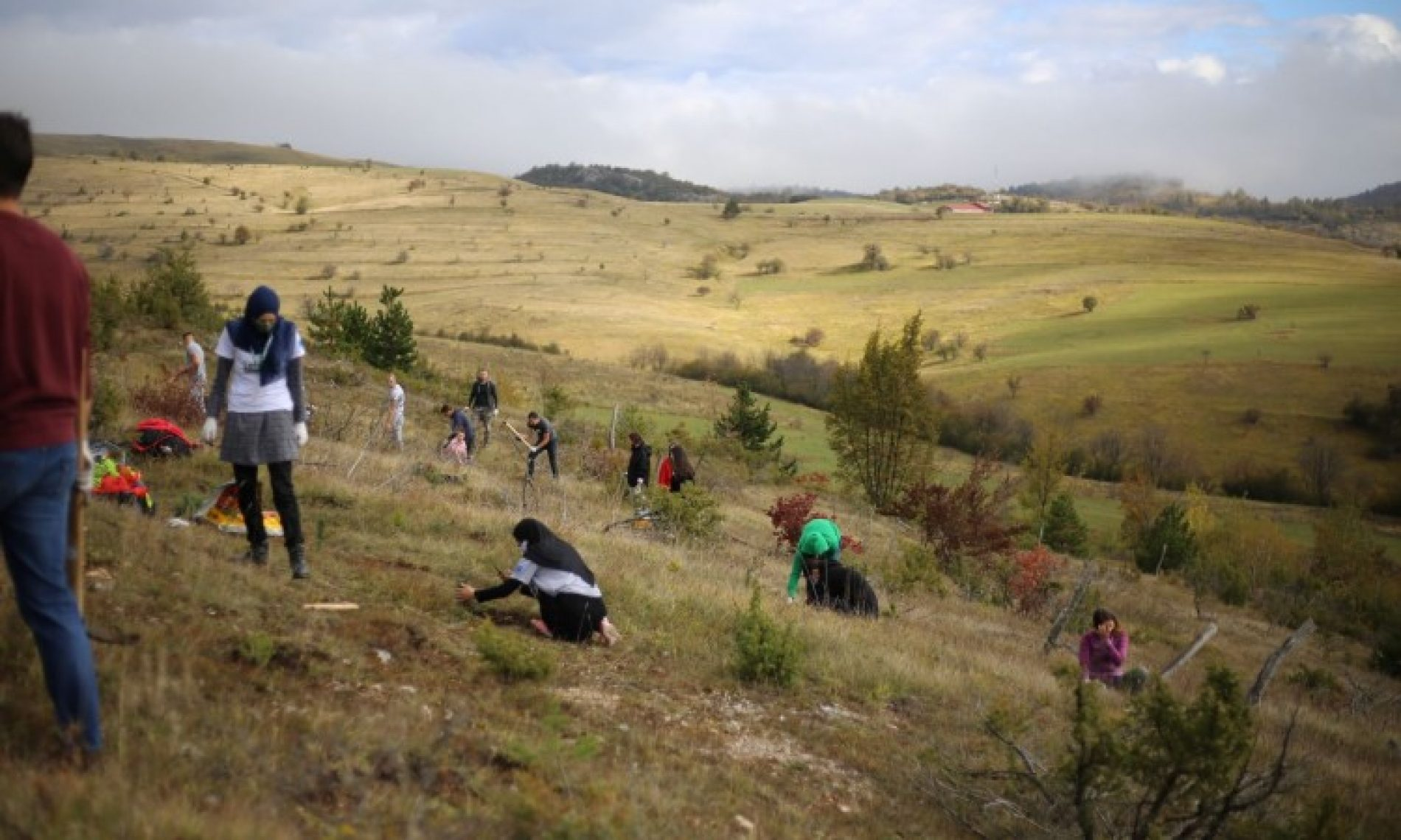 Na Bjelašnici volonteri posadili 1.000 sadnica bijelog bora