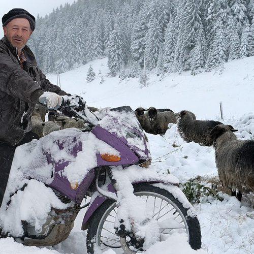 Vlašić pod snijegom, ovačari kreću na put dug 200 kilometara (Video)