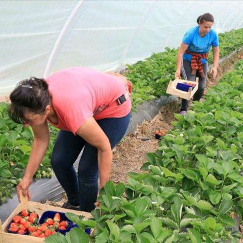 Za pomoć poljoprivrednom razvoju ruralnih područja osigurano oko 12 miliona eura