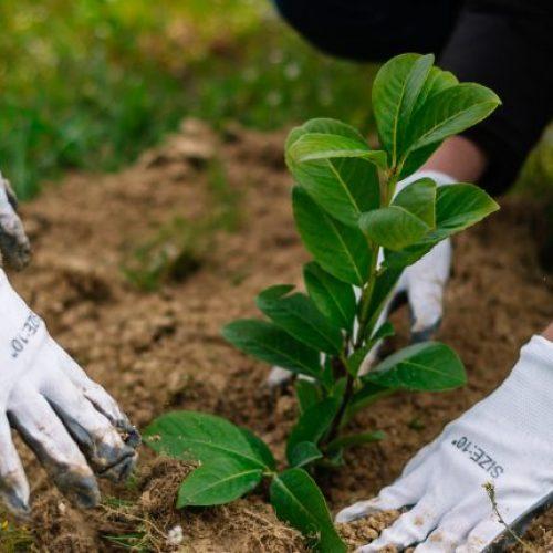 """Mladi volonteri zasadili više od 6000 sadnica uz poruku """"Jedno drvo čini razliku!"""""""