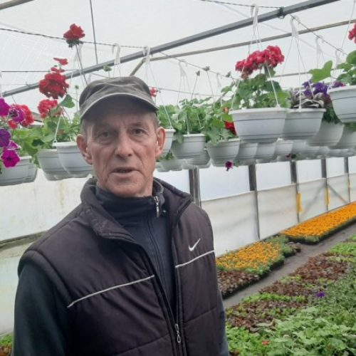 Goraždanin Munir Kazagić ove godine utrostručio proizvodnju cvijeća