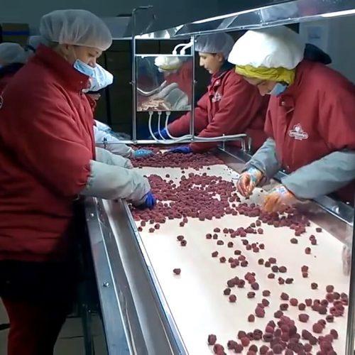 Firma Starnet iz Bugojna na tržište EU izvozi sto posto prerađenih proizvoda