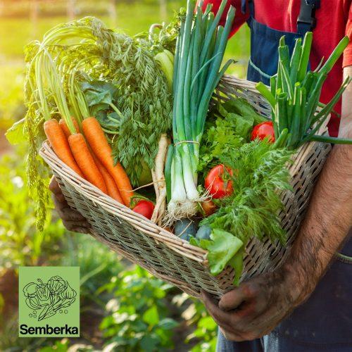 """Semberka"" ove godine planira preraditi oblizu 10.000 tona povrća"