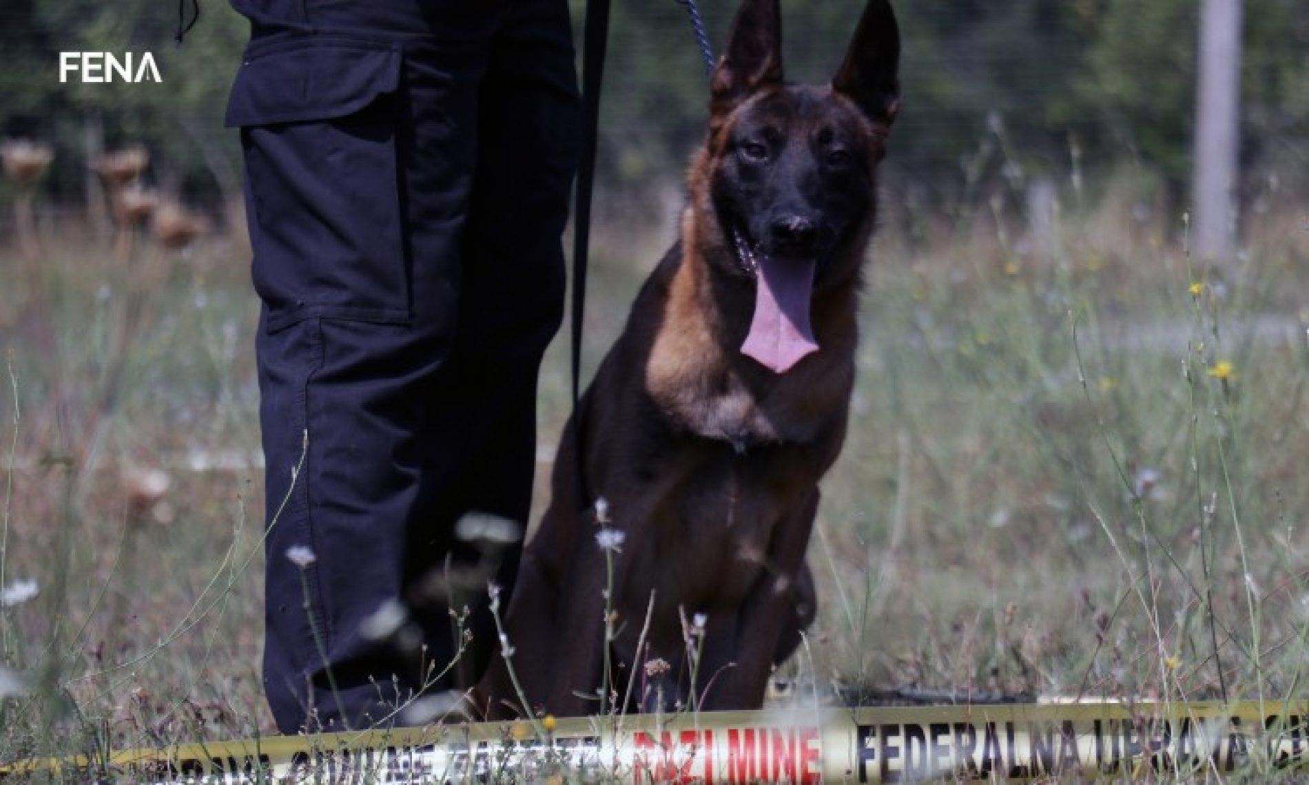 Hadžimujagić: Jedan obučen pas može zamijeniti desetak deminera (VIDEO)