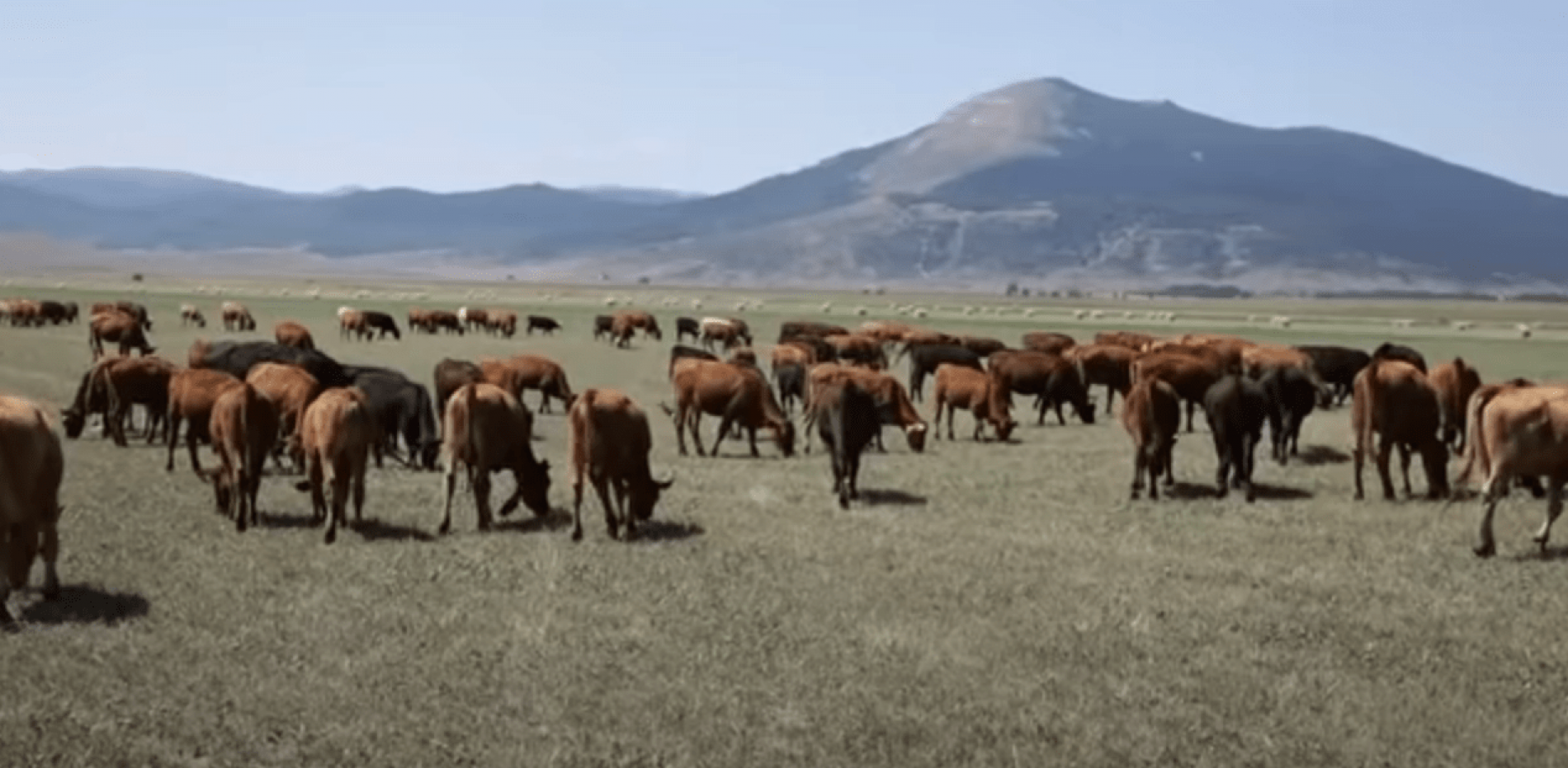 Kupres: Stanište za 13.000 goveda i 9.000 ovaca