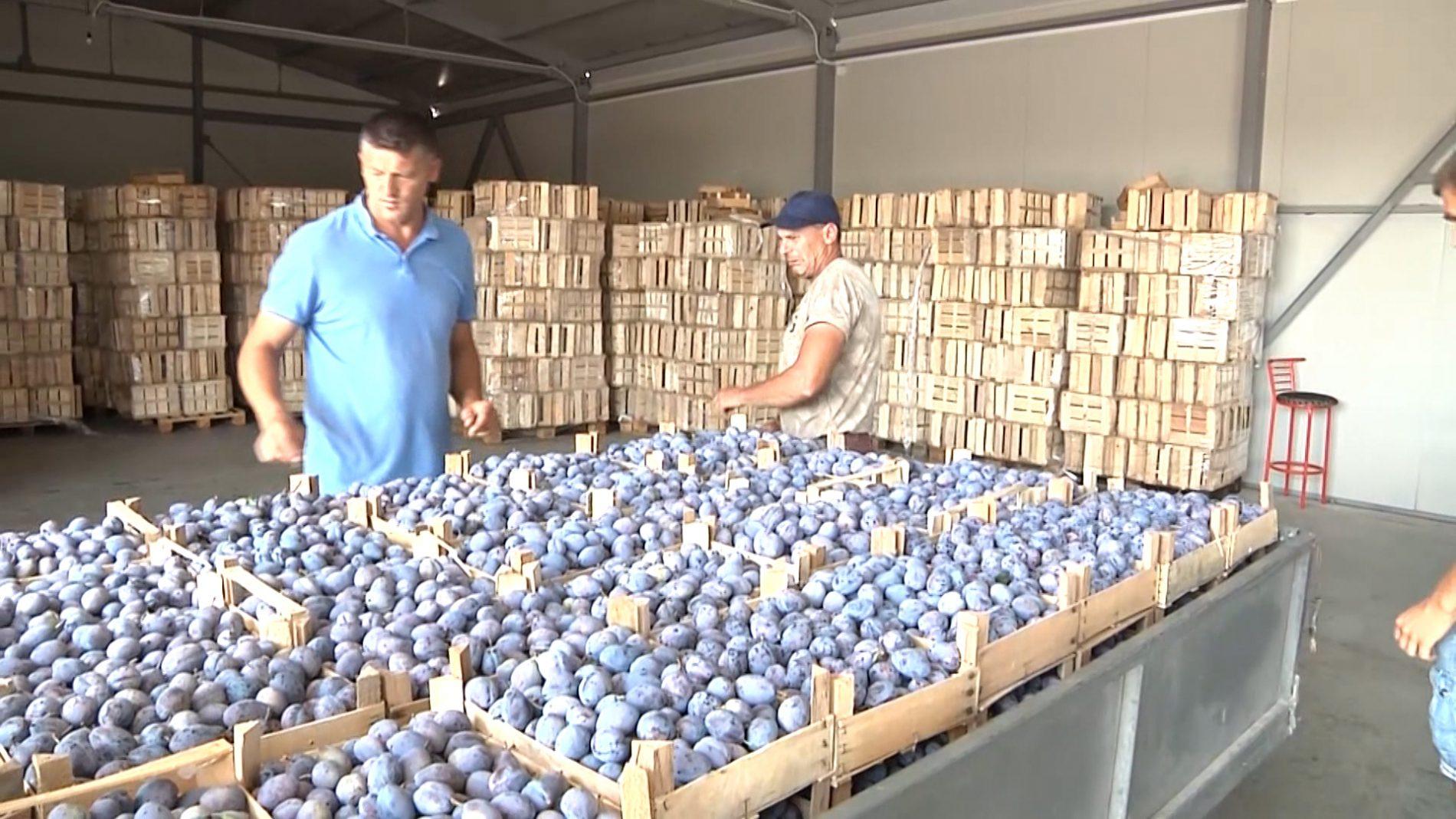 Šljive sa sjevera Bosne u Njemačkoj: Može se solidno živjeti od voćarstva