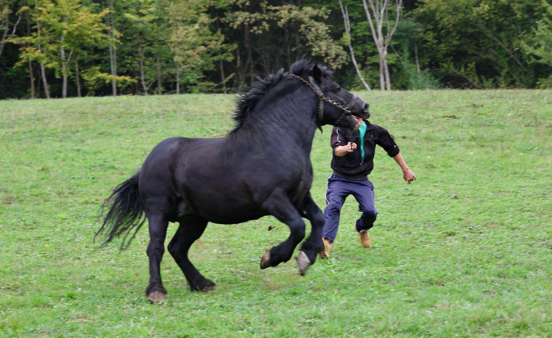 Krajina ljepša od Floride: Adnan Medić ulaže u konje i seoski turizam u rodnoj Sanici