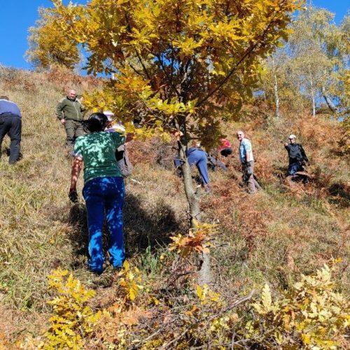Goražde: Na Hranjenu posađeno 1.000 sadnica bijelog bora